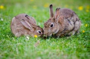 Die beliebtesten Kaninchennamen