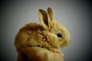 kaninchen durchfall baby