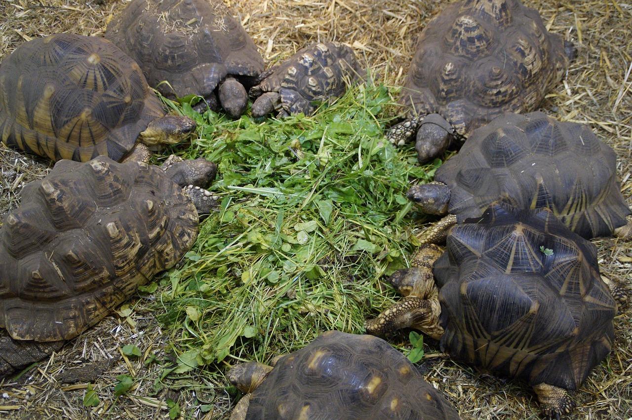 schildkrötenfutter