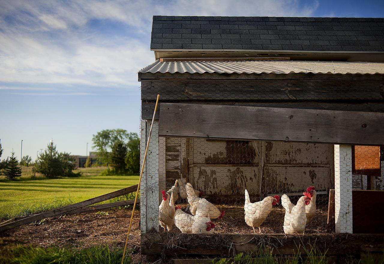 hühnerstall zubehör