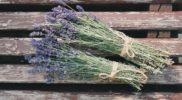 beautiful-flowers-1866481_640