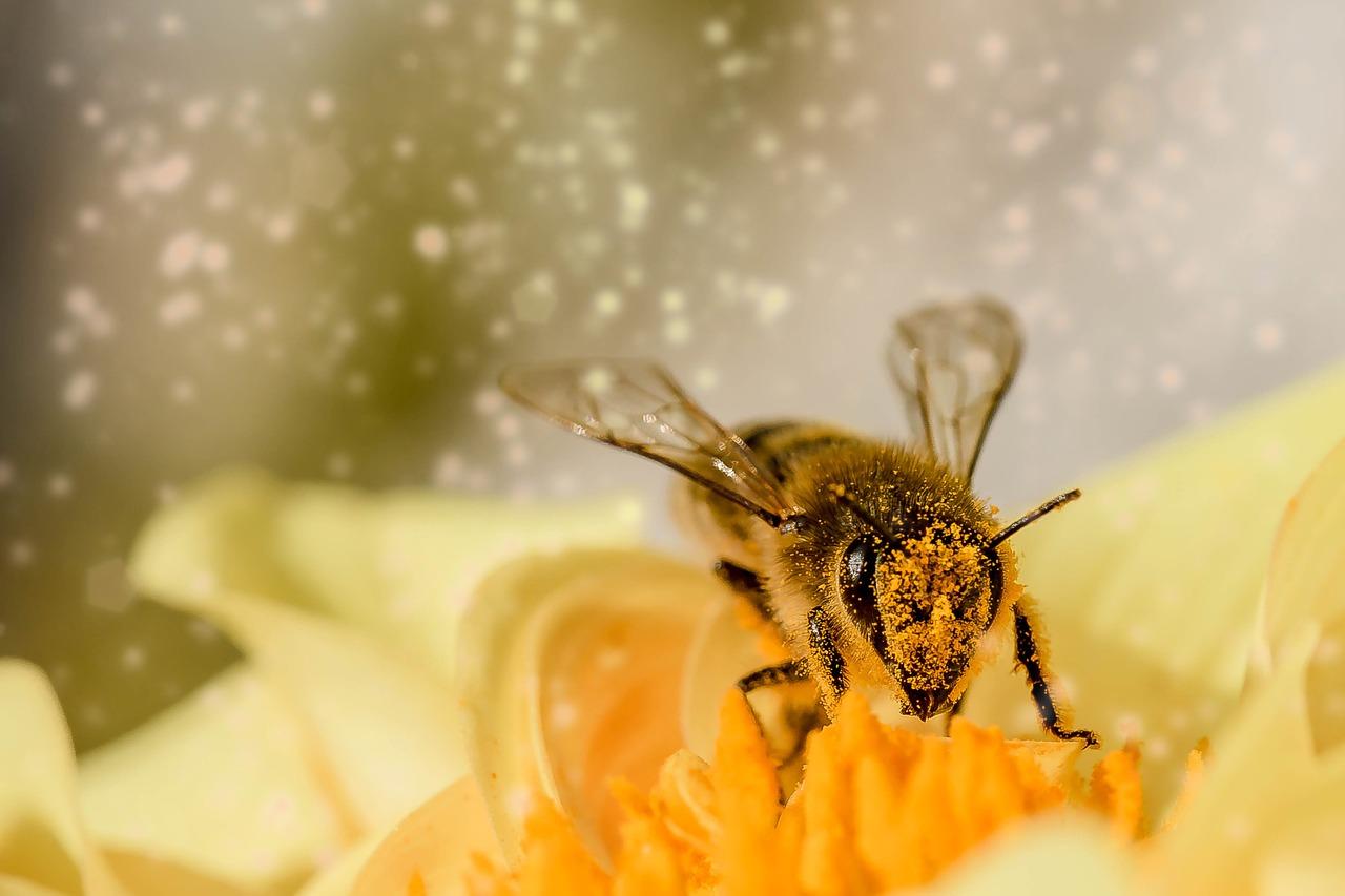 Biene Honig Blume Bestäuben