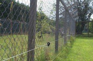 Elektrifizierter Zaun